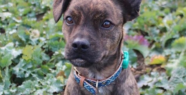 Qu'est-ce qu'un collier GPS pour chiens ?